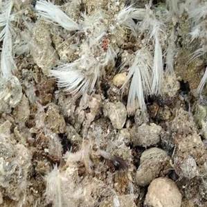 供应 热销 鸽子粪 纯天然晒干鸽子粪 鸟禽粪便 猕猴桃 核桃专用肥料