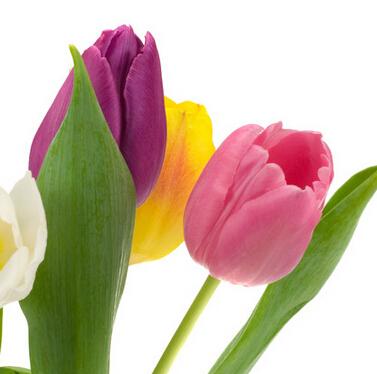 唐山花花公鲜花