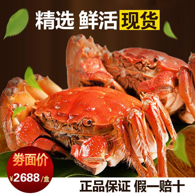 公蟹4.5母蟹3.2两四对八只正宗阳澄湖大闸蟹