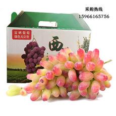 精品葡萄礼盒装 美人指葡萄 新鲜葡萄 自家种植 现摘现发 5斤或8斤装