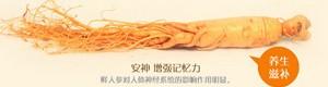 中国人参产业网