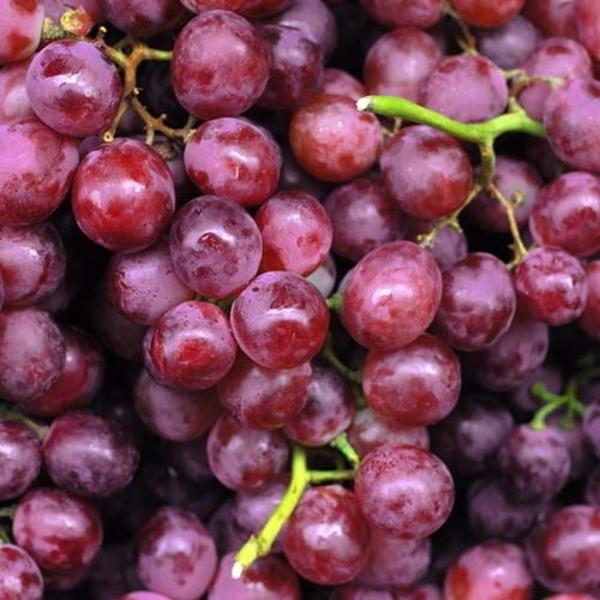 她的紫葡萄�_种植生产新鲜的紫葡萄