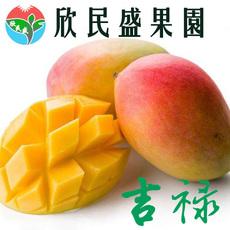 攀枝花吉禄欣民盛芒果果园直发代理8斤装一件代发新鲜水果吉禄芒