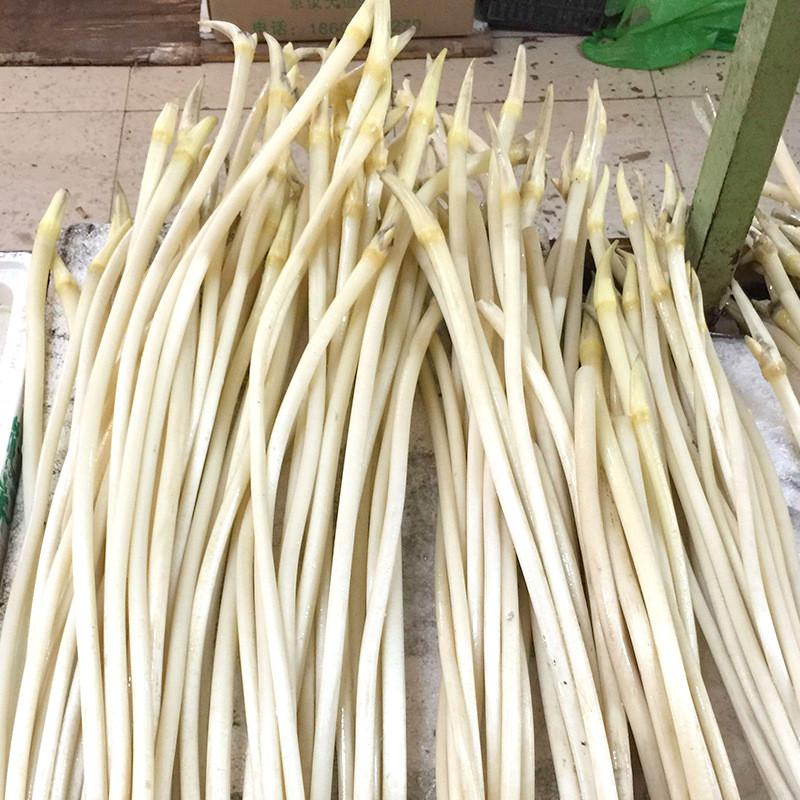 供应新鲜藕带 原产地直接拿货 仙桃藕带 藕御莲藕种植场批发
