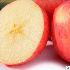供应厂家常年供应热销产品红富士苹果 养生苹果价格 营养价值丰富