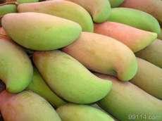 供应芒果核 芒果种子 芒果苗