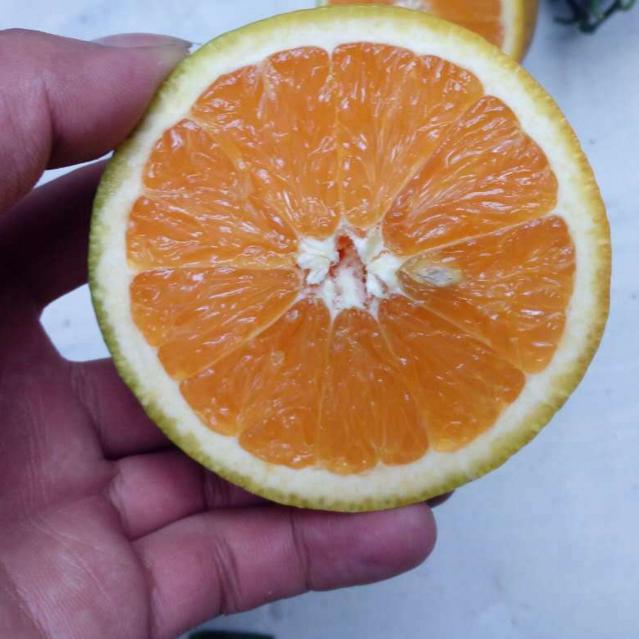 大量供应脐橙