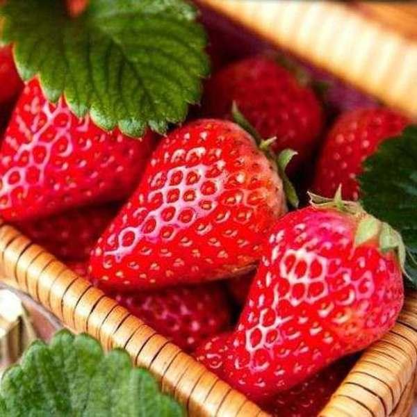 鑫泰园农业 新鲜草莓 法兰地草莓 国产草莓 味美多汁 草莓新鲜批发 现货