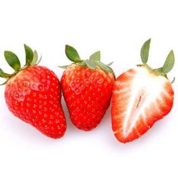 鑫泰园农业 新鲜草莓 法兰地草莓 国产草莓 味美多汁 新鲜草莓批发 现货