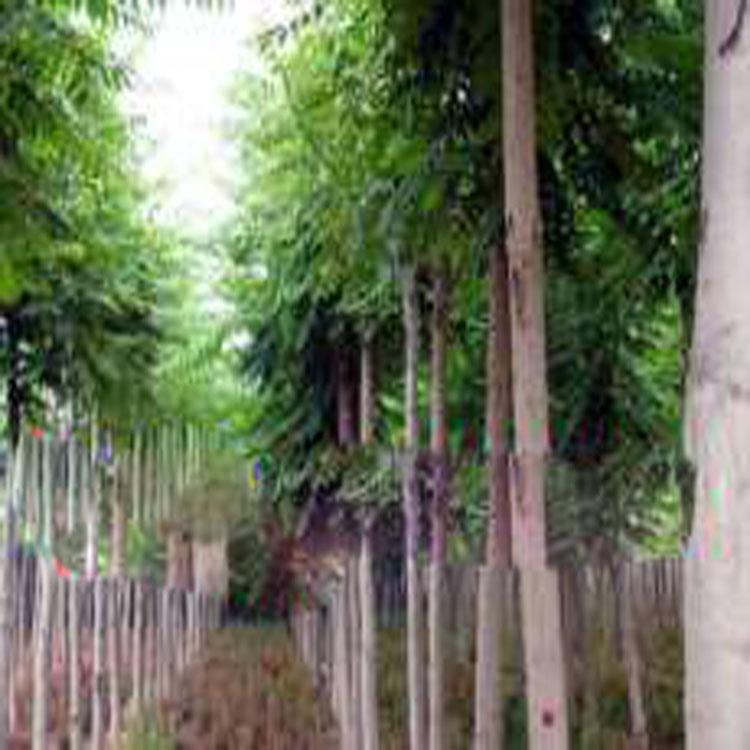 菏泽木瓜树价格–中国网库