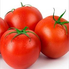 精品蔬菜 新鲜西红柿 500g 现采摘新鲜蔬菜 经销批发