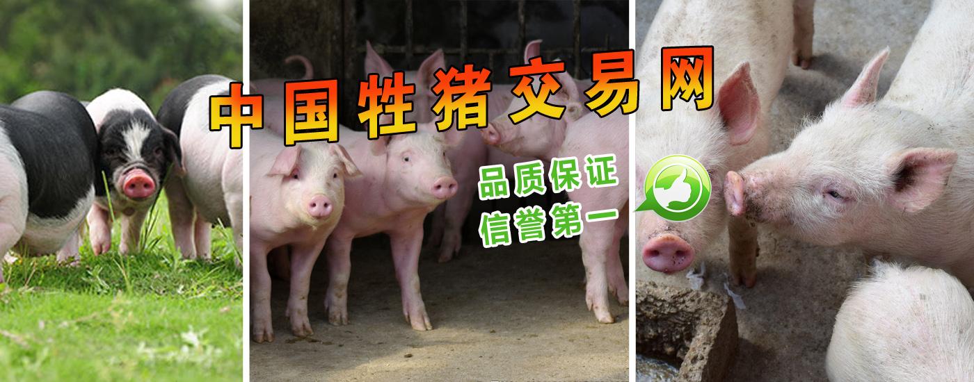 岳阳县平友生态牲猪养殖专业合作社