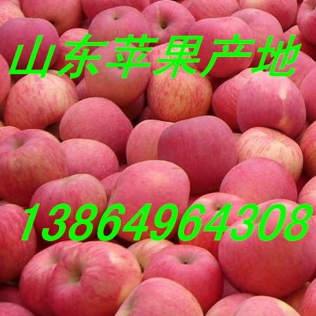 中秋礼品苹果山东红星苹果产地价格