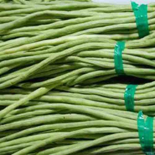 新乡市种植生产新鲜的长豆角
