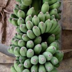 海南皇帝蕉新鲜香蕉水果