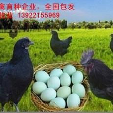 2018年绿壳蛋鸡苗价格,绿壳蛋鸡苗批发