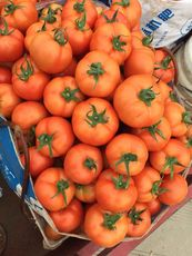 云南弥勒优质西红柿 大量上市