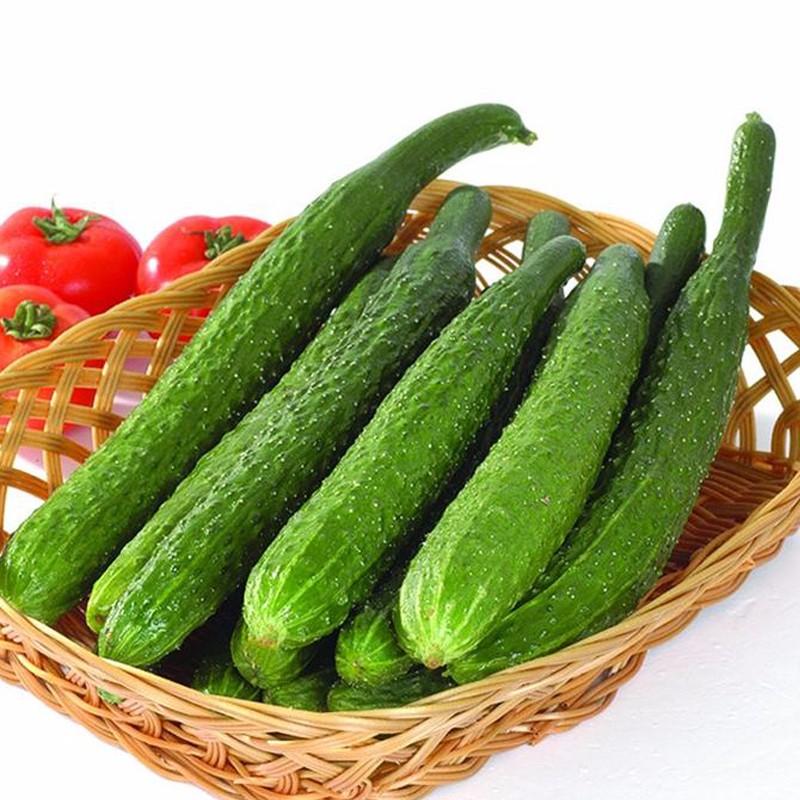 黄瓜肥水管理技术