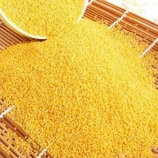 供应小黄米散装农家红谷小米25kg 厂家批发直销量大优惠