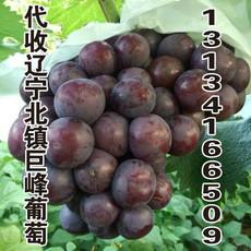 供应大粒巨峰葡萄