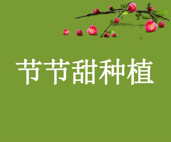邹城市节节甜种植专业合作社