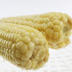润禾玉米  开袋即食 新鲜玉米 玉米棒子 粘玉米 机白玉米 甜嫩玉米穗 1箱20根