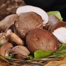 香菇降血脂降胆固醇 石泉香菇