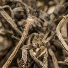 美味茶薪菇 茶薪菇  茶树菇  美食