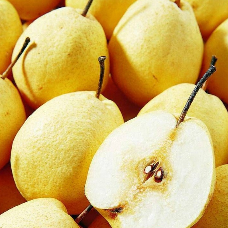供酥梨 新鮮水果