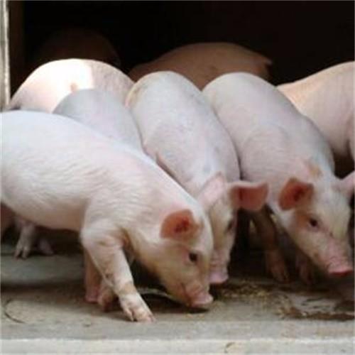 铅山县新狮生猪养殖场