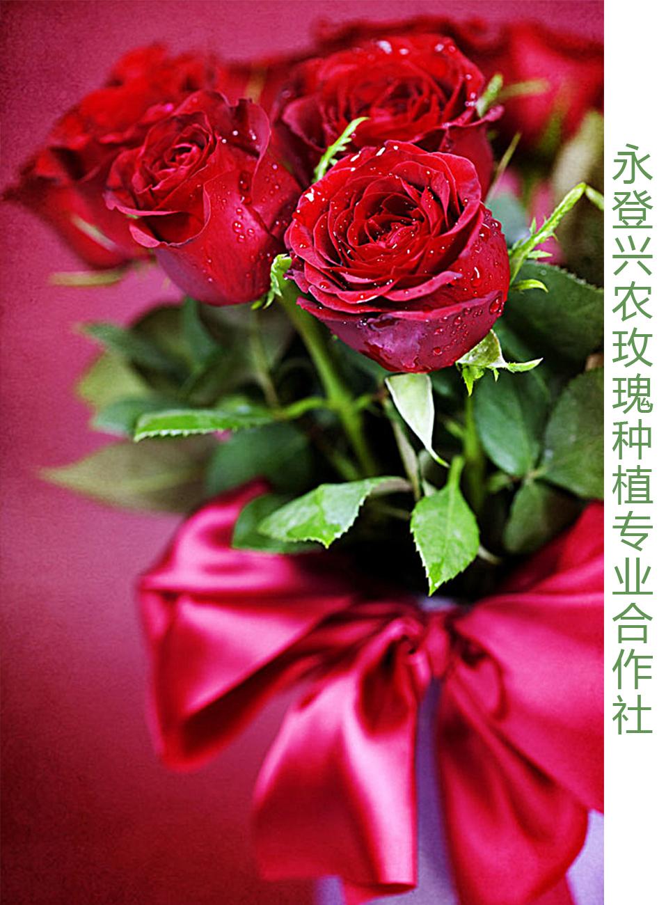 永登县兴农玫瑰种植专业合作社