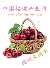 中国樱桃产业网