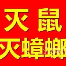 黄骅商场超市灭鼠,酒吧饭店灭蟑螂服务就找沧州清波