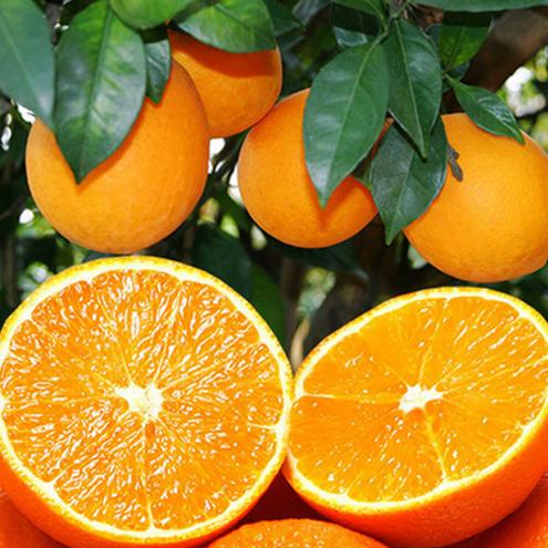 预售赣南脐橙会昌原产地自家果园现摘现发5斤10斤20斤/箱批发代发