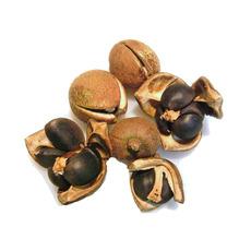 供应 厂家直销  农副产品 油茶籽  价格面议欢迎询价