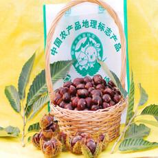 批发炒货店专用泰山特产鲜板栗 泰山姐姐牌栗子 好果率98%
