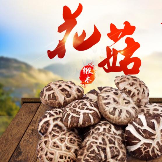 超峰食用菌 自产特级野生花菇特价250g