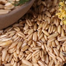 优质低价批发供应正品德伟东北特产有机燕麦米