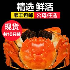固城湖大闸蟹公4.0-3.8两母3.0-2.8两顺丰现货礼盒10只装公母红膏鲜活螃蟹
