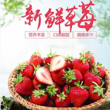 草莓新鲜水果牛奶油巧克力甜大草梅礼盒 议价