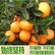 精品果10斤正宗赣南脐橙 橙子 新鲜水果批发11月上市