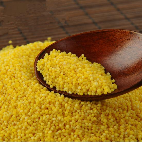 米之源山东黄小米 黄小米大量批发销售 南涧黄小米