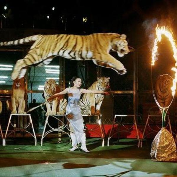环球飞车出租动物杂技表演秀方案流程马戏团表演出租
