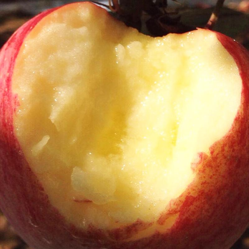 陕西洛川苹果 孕妇水果 新鲜脆甜10斤普通装包邮
