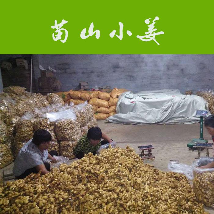 山东莱芜小姜    生姜    绿色天然