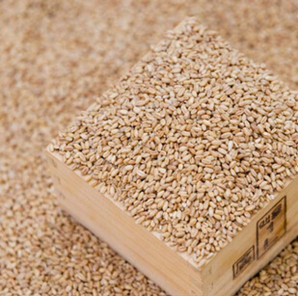 新季非转基因高蛋白大豆