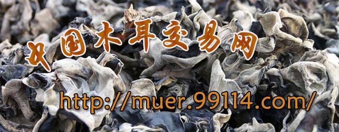 中国木耳交易网