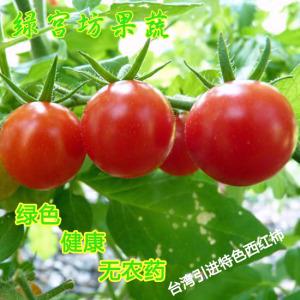 绿宫坊蔬果 台湾引进特色西红柿 圣女果