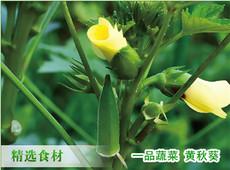 山东一品蔬菜黄秋葵基地 黄秋葵价格
