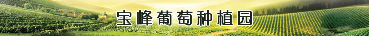 宝峰葡萄种植园